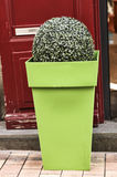 Зеленая дверь красного цвета объявления цветочного горшка Стоковое Фото