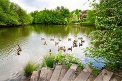 зеленая весна ландшафта Стоковые Изображения