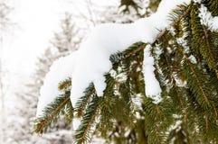 Зеленая ветвь ели под крышкой снега Стоковое Фото