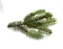 Зеленая ветвь сосны на белой предпосылке Стоковое фото RF