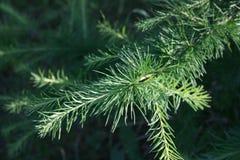 Зеленая ветвь Стоковые Изображения RF