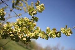 Зеленая ветвь Стоковые Изображения