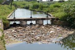 зеленая вода загрязнения примечания стоковые фотографии rf