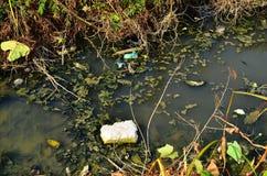 зеленая вода загрязнения примечания Стоковое фото RF