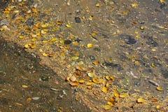 зеленая вода загрязнения примечания стоковые изображения