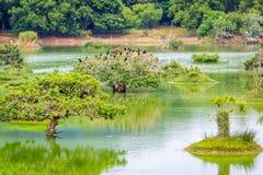 зеленая вода озера Стоковое Изображение