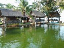 зеленая вода Стоковые Изображения RF