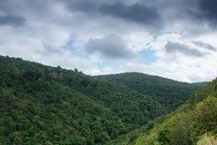 Зеленая гора леса на пасмурном летнем времени яблоко заволакивает вал солнца природы лужка ландшафта цветков Стоковое фото RF