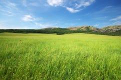 зеленая гора лужка Стоковое Изображение RF
