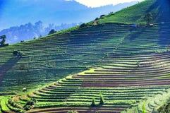 Зеленая гора Стоковое Изображение RF