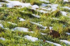 Зеленая грациозность Стоковое Фото