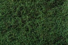 Зеленая грубая губка Стоковое Фото
