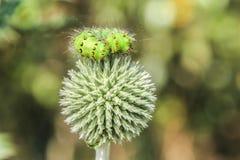 Зеленая гусеница стоковая фотография