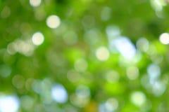 Зеленая естественная предпосылка из дерева или bokeh фокуса Стоковое фото RF