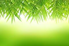 Зеленая естественная предпосылка с бамбуковыми листьями Стоковое Фото