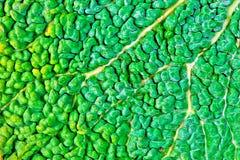 Зеленая естественная предпосылка Стоковая Фотография