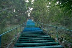 Зеленая лестница вверх в древесинах Стоковая Фотография