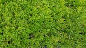 Зеленая деталь листьев папоротников Стоковые Изображения RF