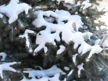 Зеленая ель в снеге Стоковое Изображение