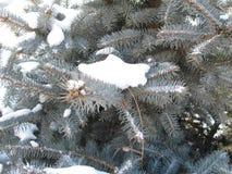 Зеленая ель в снеге Стоковые Изображения