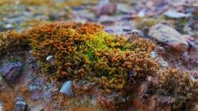 Зеленая желтая трава на почве Стоковые Фото