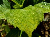 Зеленая жизнь Стоковое Изображение