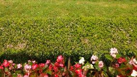 Зеленая загородка двора изгороди Стоковое Изображение