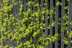 Зеленая загородка Стоковые Изображения