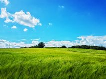 Зеленая зеленая трава Стоковые Изображения RF