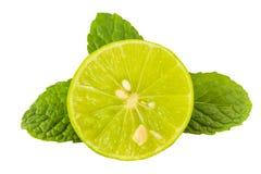 Зеленая известка сочная и мята на белизне Стоковые Изображения