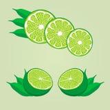 зеленая известка иллюстрация вектора
