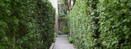 Зеленая изгородь между тропой Стоковое Фото