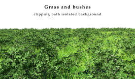 Зеленая изолированные трава и кусты Стоковые Фотографии RF