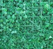 Зеленая искусственная текстура листьев Стоковое Изображение RF