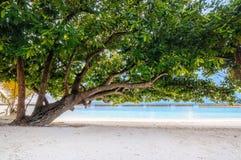 Зеленая листва дерева на пляже с белым песком на тропическом острове Мальдивов Стоковое фото RF