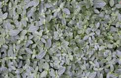 Зеленая и белая предпосылка лист стоковое изображение rf
