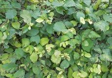 Зеленая и желтая предпосылка листьев Стоковая Фотография RF
