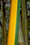 Зеленая и коричневая бамбуковая деталь Стоковое Изображение