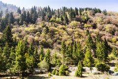 Зеленая и красочная предпосылка леса дерева Стоковые Изображения