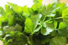 Зеленая и свежая петрушка Стоковая Фотография