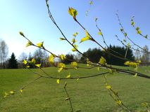 Зеленая и солнечная весна Стоковое Изображение
