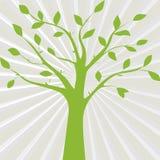 Зеленая иллюстрация вектора силуэта дерева на абстрактном gra Стоковое Фото