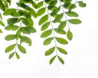 Зеленая картина листьев на поверхностях Стоковая Фотография