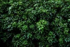 зеленая картина листьев Стоковое Фото