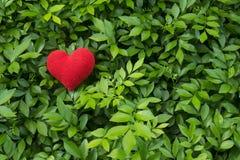 Зеленая картина лист с красным сердцем Стоковое Изображение RF
