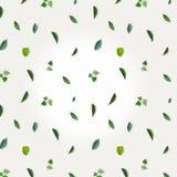 Зеленая картина сделанная растительности, петрушки и базилика на белой ткани таблицы Стоковая Фотография RF