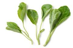 Зеленая китайская листовая капуста Стоковая Фотография