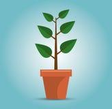 зеленая концепция роста дерева Стоковые Изображения