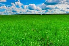 Зеленая красивая лужайка и славная солнечная погода стоковые фотографии rf