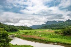 Зеленая кривая потока поля Стоковые Изображения